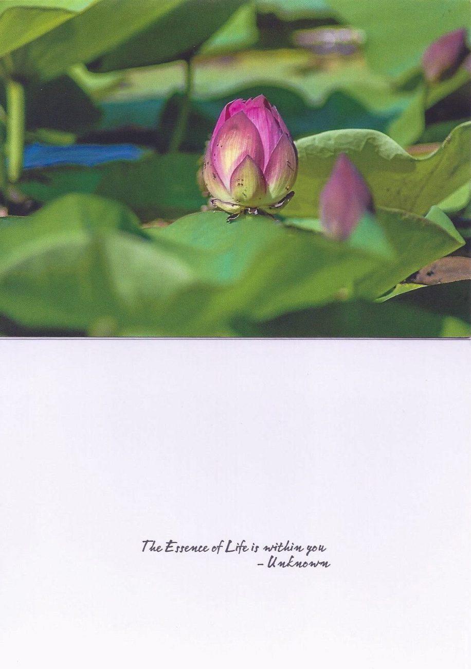 Fine Art Photography Prints Greeting Cards Bookmarks Cornelia